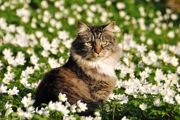 A cat in a field of flowers.