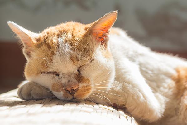 An old, mangey looking cat sleeping on the floor.
