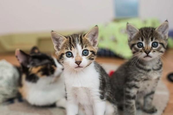 catster-kitten rescue-29