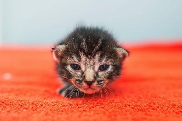 catster-kitten rescue-3