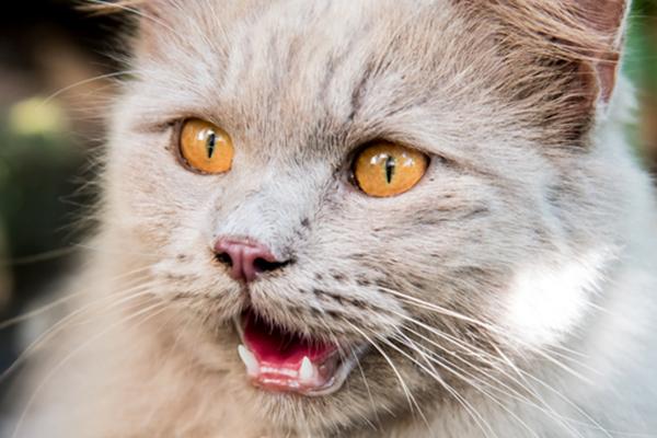 how do cats show affection