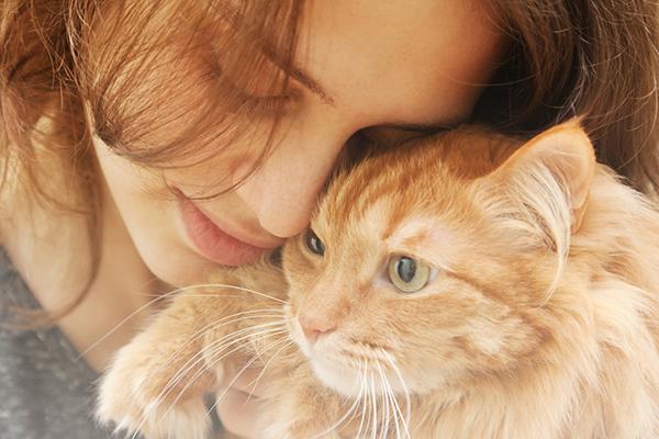An orange cat headbutting his human.