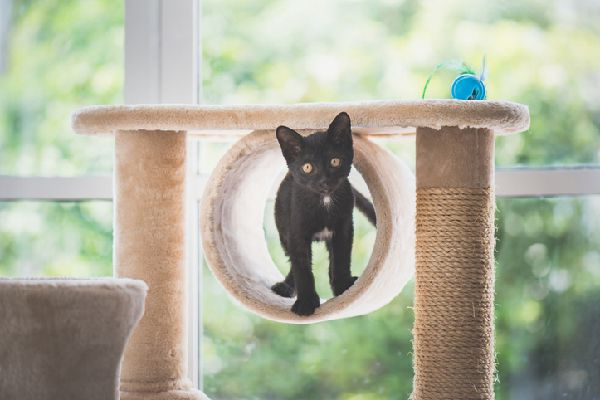 A black cat on a scratching post.