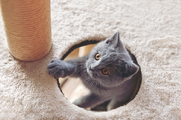 Post-kitten blues. A cat popping out a cat tree.