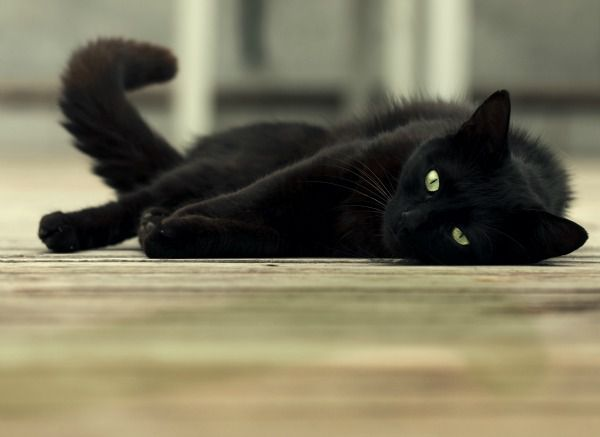 cat-laying-on-floor