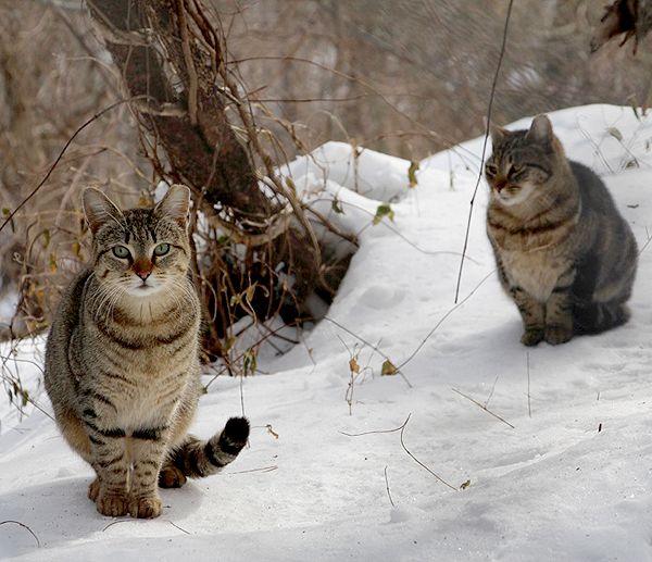 Jersey City cats. Photo by Susan Richmond