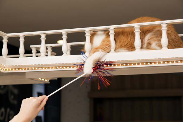 A cat reaching for a toy from up high.