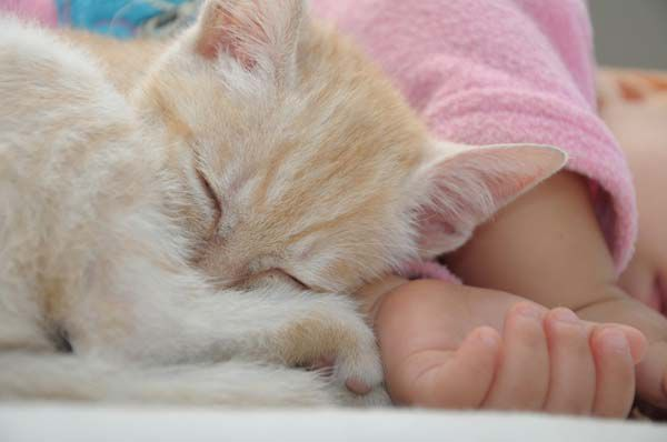 A kitten and a baby sleeping together.