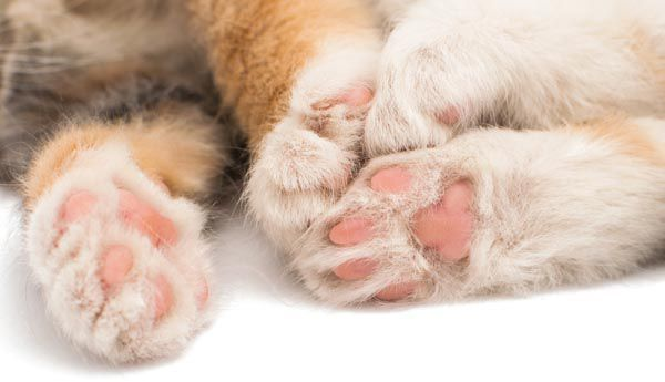 A close up of cat paws.
