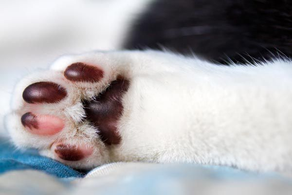 Cat paw pads that are both pink and black.