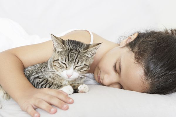 A cat with his human in bed.