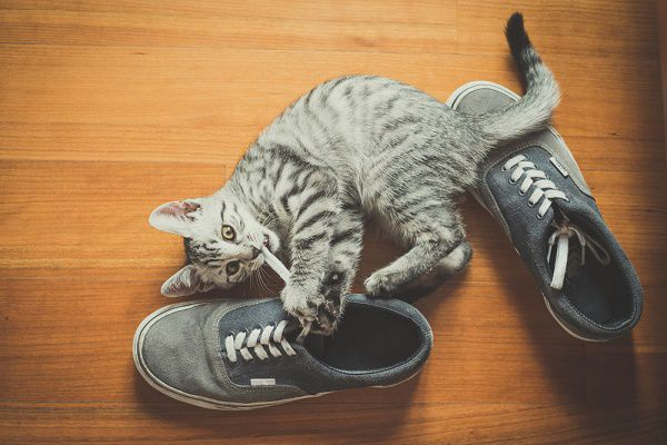 A cat playing with shoes.