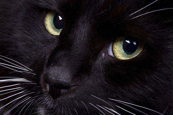 Close up view of a cat nose.