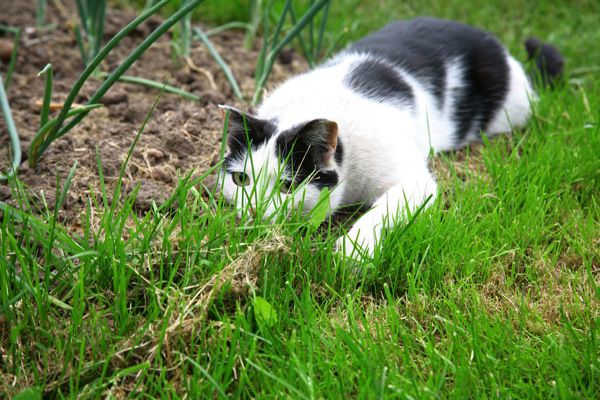 A cat going on a hunt.
