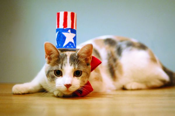 A scared cat in a patriotic Uncle Sam hat.