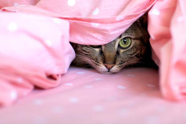 Many cats are stressed by babies.  by Shutterstock.
