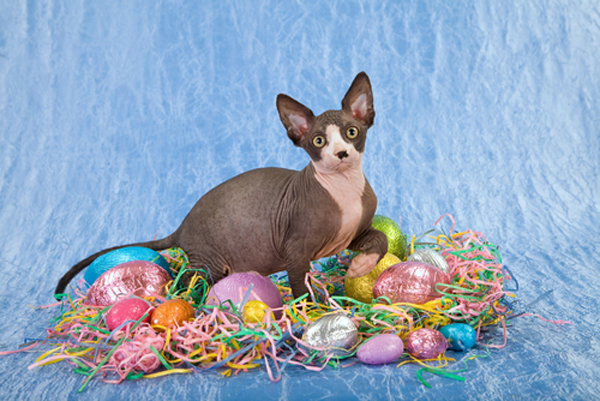 A cat with Easter chocolate.