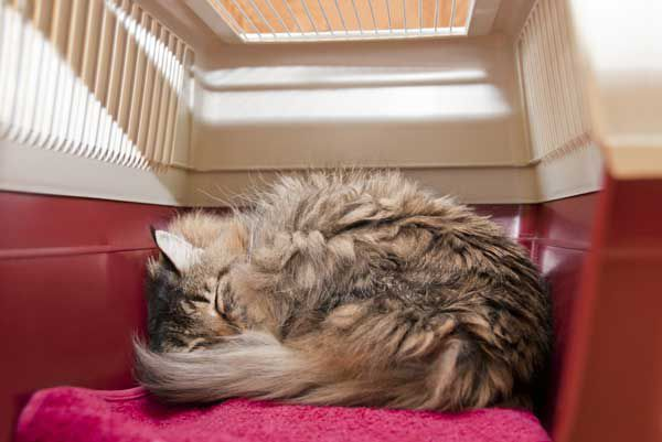 A cat sleeping in his cat carrier.