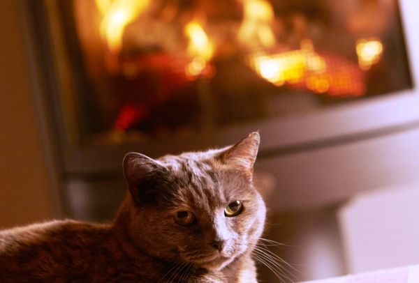 A cat relaxing by the fireplace.