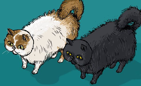 An illustration of two fluffy Persian cats.