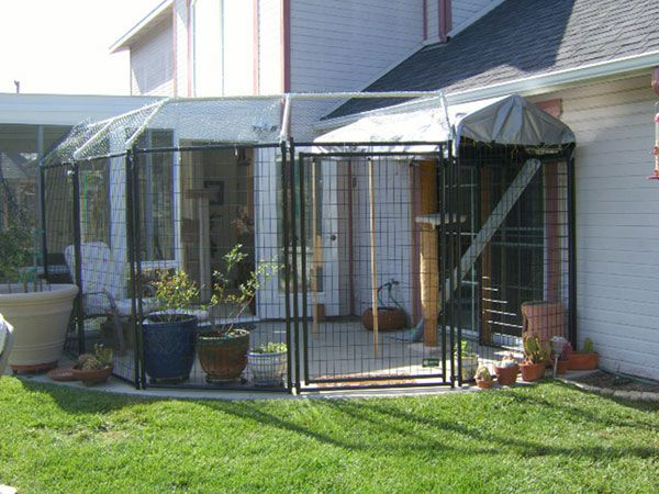 Catios allow indoor cats to safely experience the outdoors.