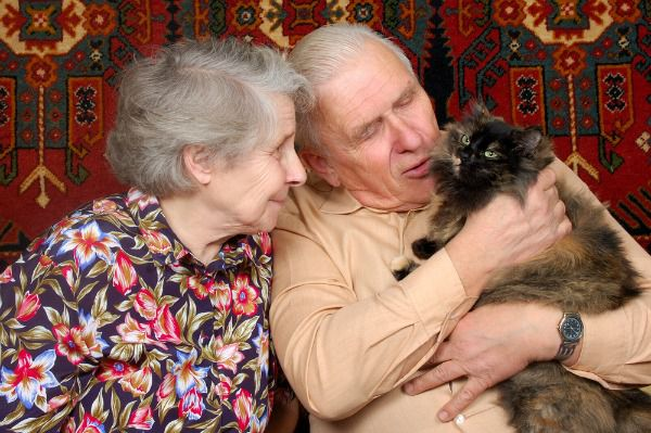 A therapy cat with an older couple.
