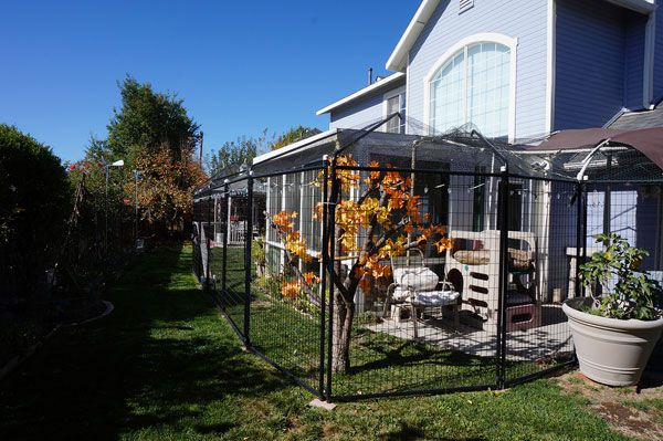 A view of a catio.