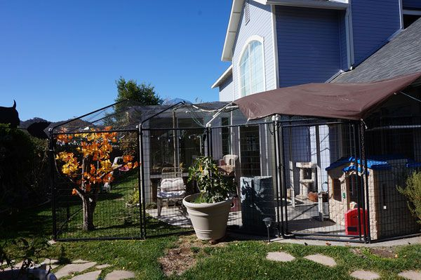 A catio for under $1000.
