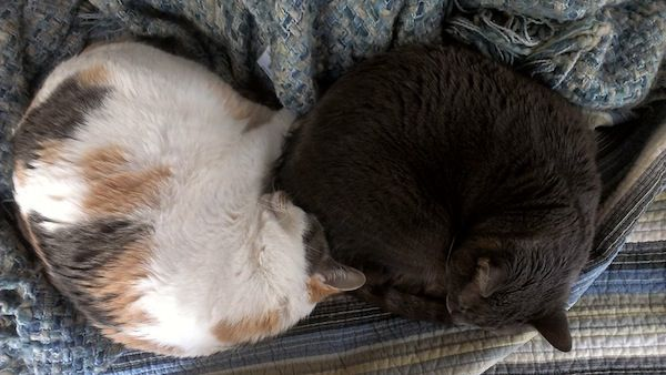 Two cats curled up together.