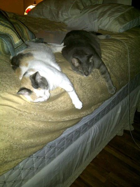 Two cats sleeping together in the same position.