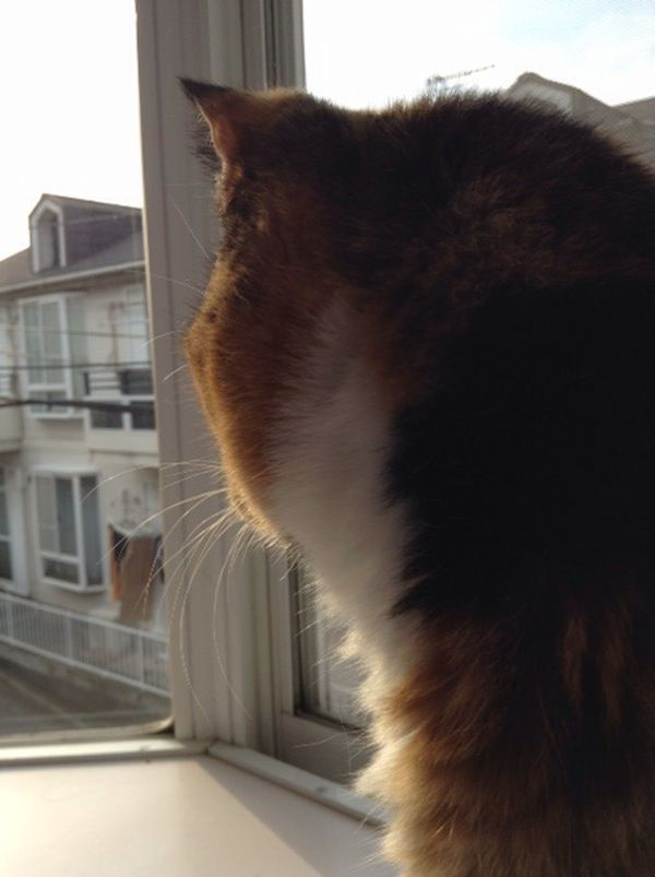 A cat looking out the window of a small apartment.