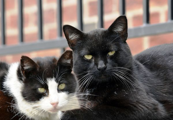 Two older cats hanging out together.