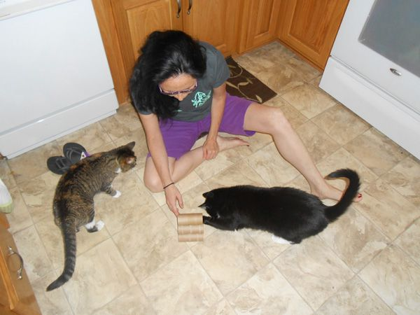 Cats playing with homemade cat toys.