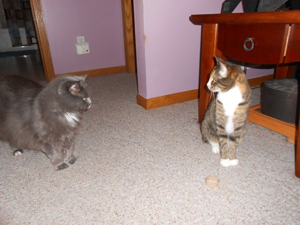 Two cats with a piece of a toilet paper roll.