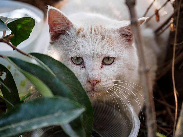 Stray cat in the woods by Shutterstock