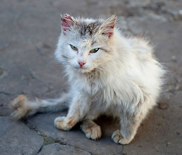 Vagrant cat by Shutterstock