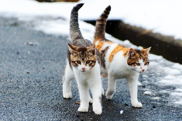 Two stray Calico kittens. Photography by Shutterstock.
