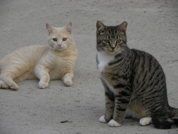 Two cats sitting near each other.