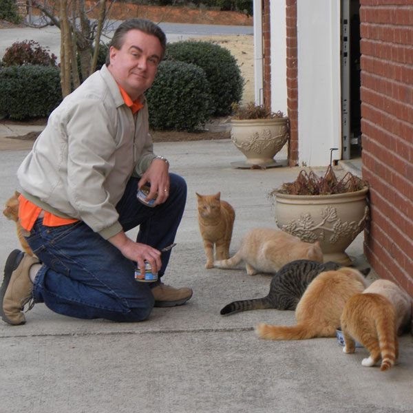 Feeding wet food to outdoor cats.