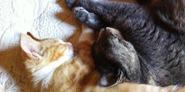 two-cats-cuddle.jpg