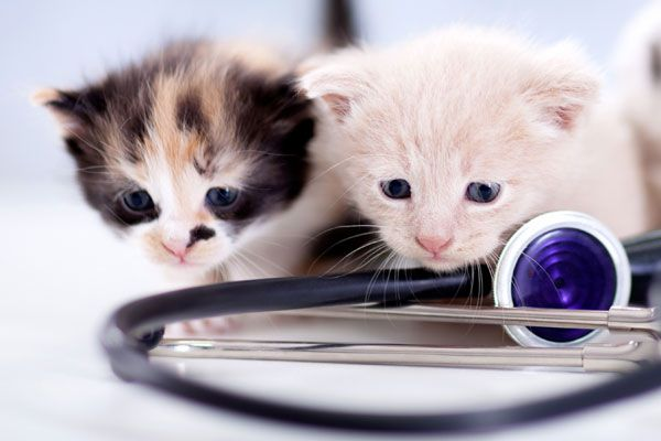 Two small kittens at the vet.
