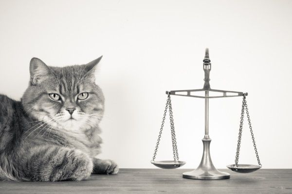 Owner sues a rescue group for refusing to return her cat.