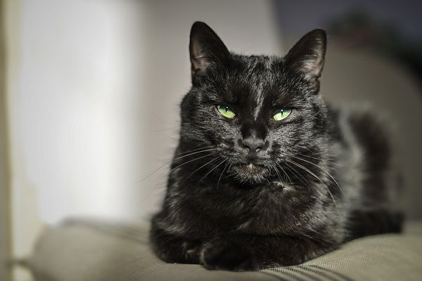 A black cat with green eyes.
