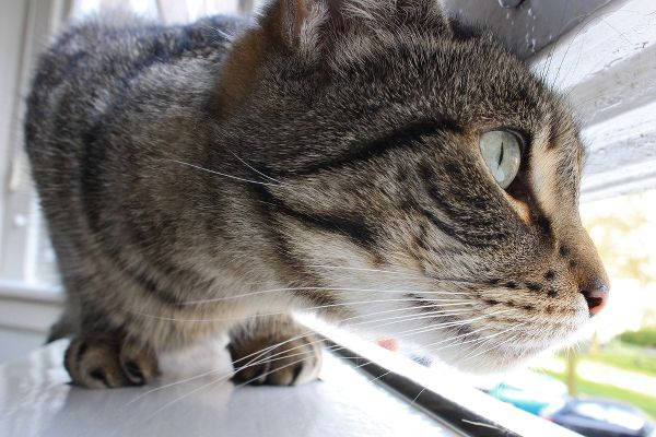 5-cat-looking-out-window-278467355