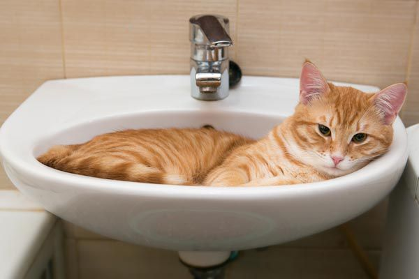 5 Reasons Cats Love Bathrooms | Catster