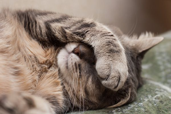 Cat covering eyes.