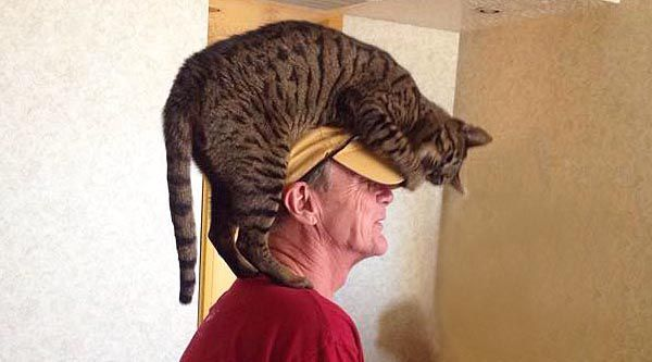 Weirdest Things Cats Do to Their Owners - Does your Cat Do These?