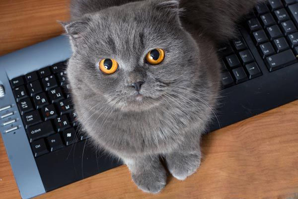 Cats often hangout on keyboards in order to get attention.