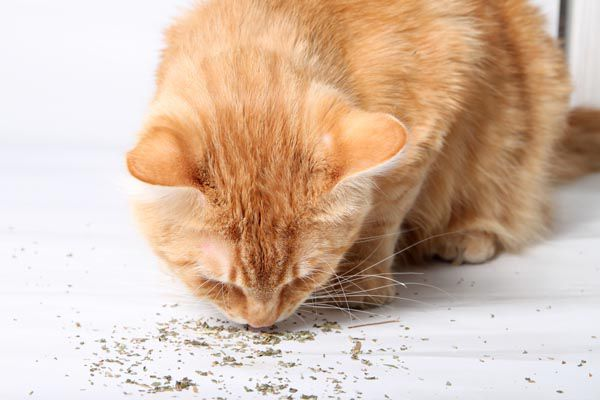 A couple of pinches of catnip.