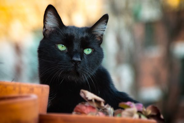 Black cat on a rooftop.